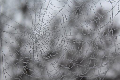 Winter, Cobweb, Frozen, Frost, Cold, Spider, Nature