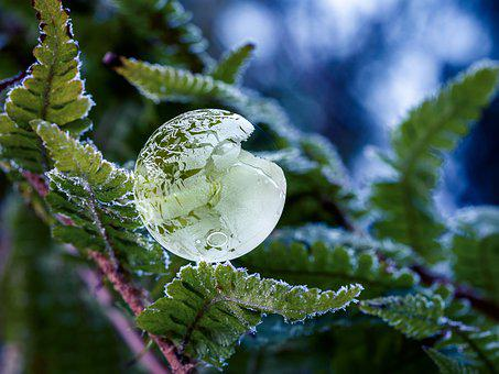 Bubble, Natur, Nature, Frost, Winter, Ice, Cold
