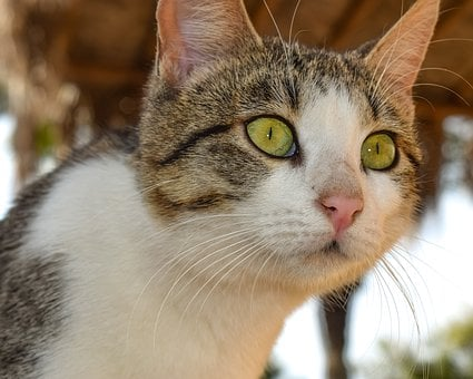 Cat, Stray, Eyes, Staring, Curious, Portrait, Outdoors
