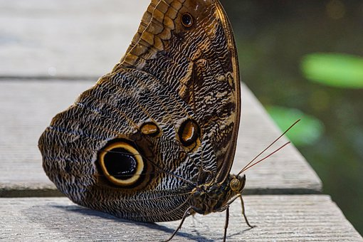 Butterfly, Insect, Close Up, Macro, Pattern