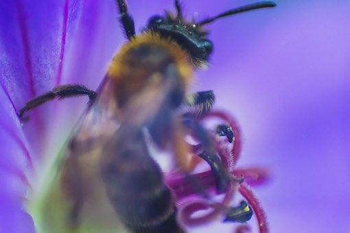 Bee, Flower, Macro, Closeup, Purple, Calyx, Pollen