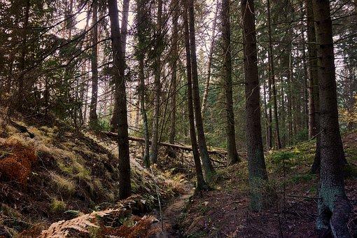 Forest, Water, Green, Nature, Landscape, Leaf, River