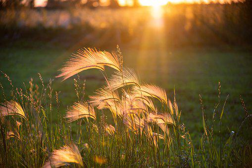 Sunset, Weeds, Warm, Glow, Green, Countryside, Scenic