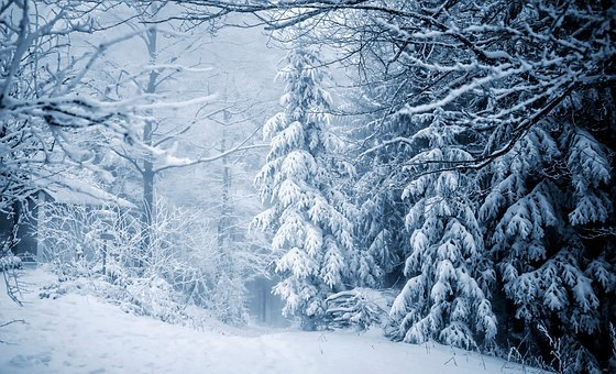 Trees, Forest, Snow, Snowy, Cold, Idyllic, Mountains