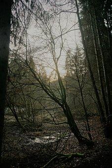 Bach, Forest, Sun, Light, Mystical, Sunset, Atmosphere