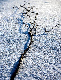 Snow, Winter, Forest, Branch, Snow Landscape, Landscape