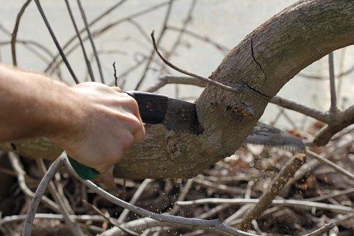 Sierra, Bonesaw, Tool, Cutting, Pruning, Branch, Trunk