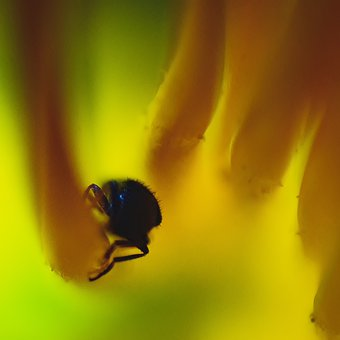 Insect, Bug, Flower, Closeup, Macro, Abstract, Yellow