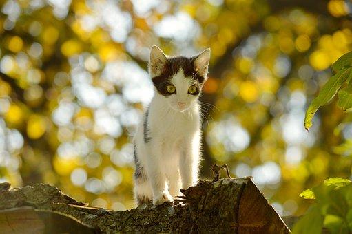 Kitten, Cat, Animal, Autumn, Garden