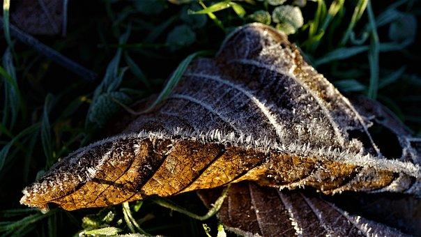 Eiskristalle, Leaf, Cold, Winter, Background, Autumn