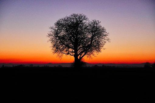 Sunset, Field, Tree, Landscape, Sky, Nature, Panorama