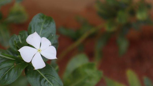 Flower Close Macro Shot, Awesome White Flower