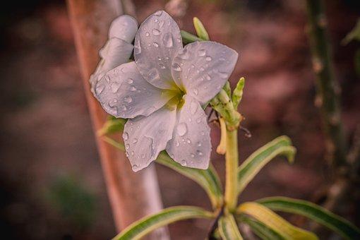 Plant, Flowers, Nature, Summer, Wildflowers, Flower