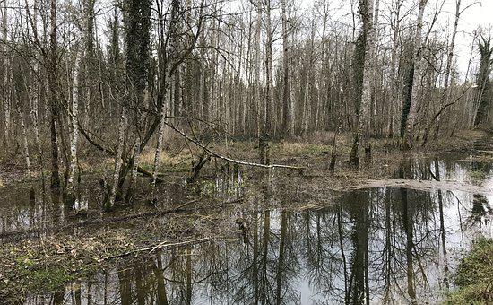 Swamp, Water, Trees, Nature, Forest, Reflection, Marsh