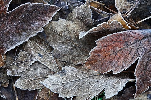 Leaves, Frozen, Frozen Foliage, Cold, Hoarfrost