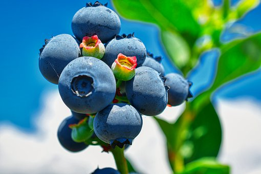 Blueberry, Superfood, Healthy, Raw, Fruit, Vegetarian