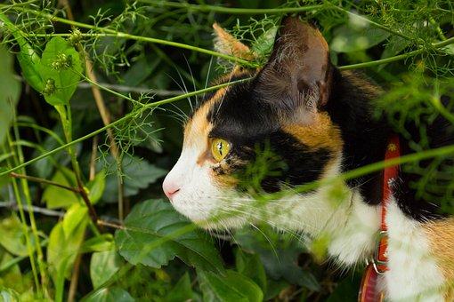 Cat, Feline, Gata, Animals, Pet, Cute, Skin, Hairy