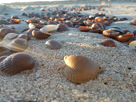Mussels, Beach, Vacations, Sand, Sea, Grains, Freedom