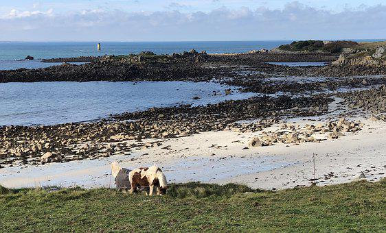 Island Of Batz, Finistère, Seaside, Landscape, Ocean