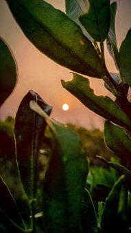 Orange, Sunset, Sun, Trees, Landscape, Forest, Nature