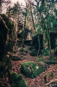 Landscape, Wood, Forest, Nature, Trees, Away