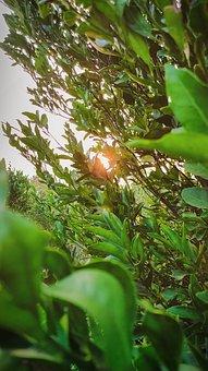 Tree, Orange, Leaf, Pattern, Nature, Leaves, Plant