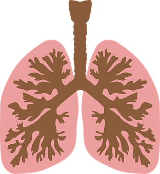 Windpipe, Airway, Lungs, Air Tube, Wind-pipe, Trachea