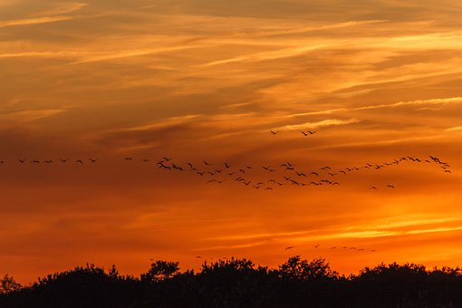 Sunset, Cranes, Nature, Migratory Birds