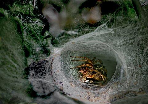 Spin, Spider, Animal, Nature, Arachnid, Web, Cobweb