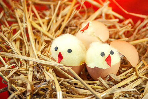 Easter, Easter Chick, Nest, Chicks, Tinker, Handicraft