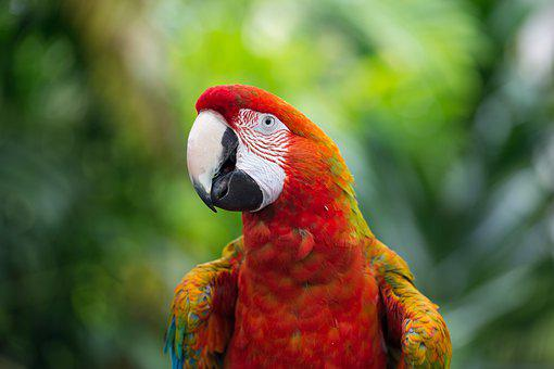 Scarlet, Macaw, Rainbow, Parrot, Plumage, Red, Color