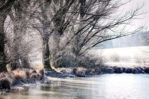 Lake, Winter, Kahl, Tree, Frozen, Ice Cover, Water