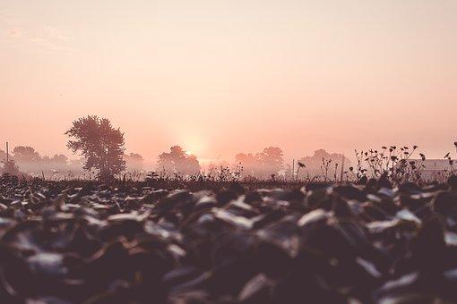 Field, Brown, Sunrise, Trees, Soil, Nature, Landscape