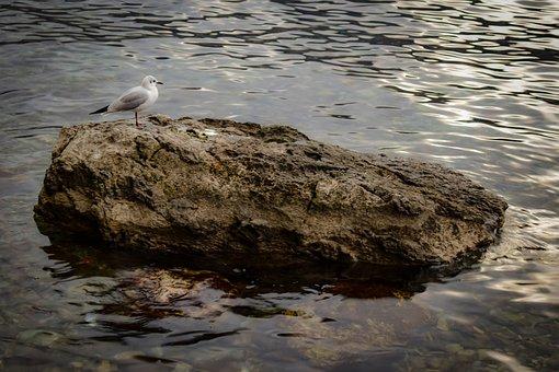 Rock, Bird, Seabird, Lake, Nature, Wildlife, Seagull