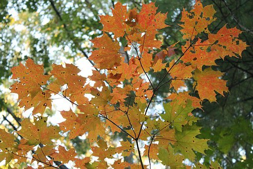 Orange, Autumn, Halloween, Fall, Thanksgiving, Yellow
