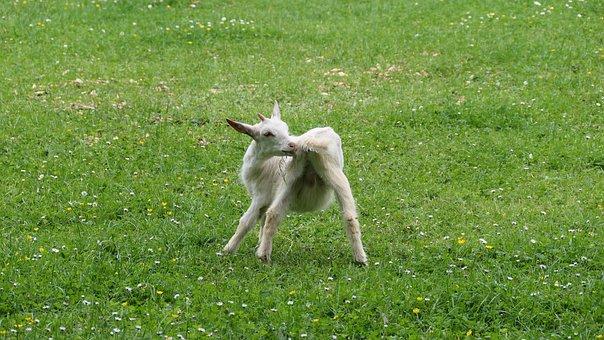 Animal, Kid, Animal World, Farm, Young Animal, Playful