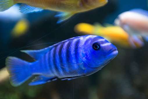 Fish, Aquarium, Water, Sea, Underwater World