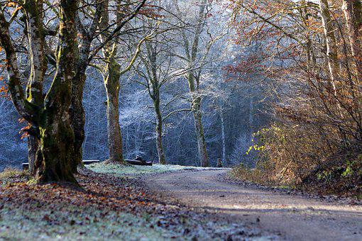 Winter, Icy, Autumn, December, Frost, Wintry, Snow
