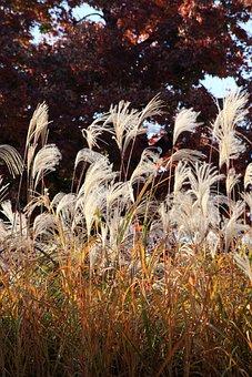 Reed, Nature, Scenery, Plants, Break, Atmosphere