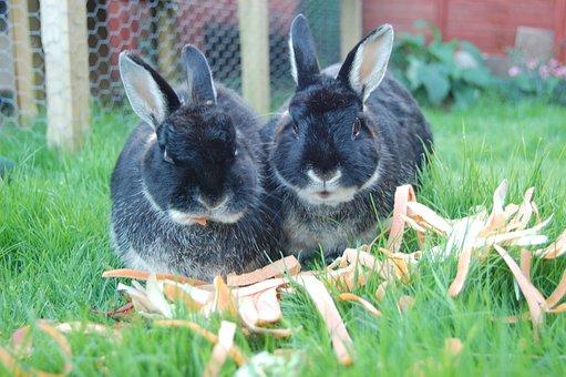 Rabbits, Twins, Bunnies