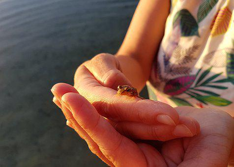 Frog, Toad, Hand, Amphibian, Close Up