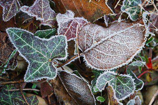 Frost, Morning, Winter, Leaves, Cold, Nature, Landscape