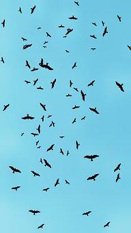 Earth Hour, Nature, Wild, Bird Photography