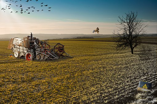Environmental Destruction, Field, Combine Harvester