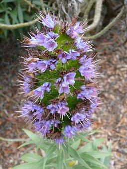 Nature, Purple, Violet, Flowers, Flower, Bloom, Flora