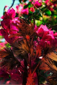 New Year In Africa, Bougainvillea, Flowers