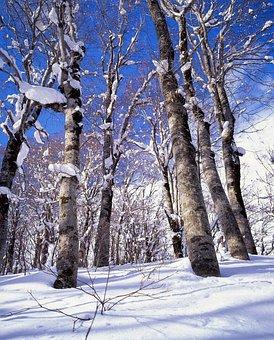 Landscape, Snow, Forest, Beech Forest, Blue Sky