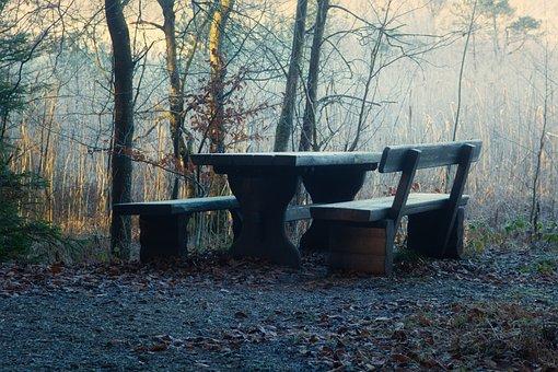 Sunlight, Seating Arrangement, Forest, Morning, Light