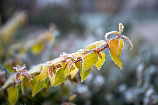 Plant, January, Garden, Frost, Winter, Nature, Cold
