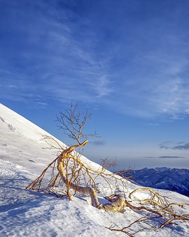 Landscape, Snow Mountain, Arboretum